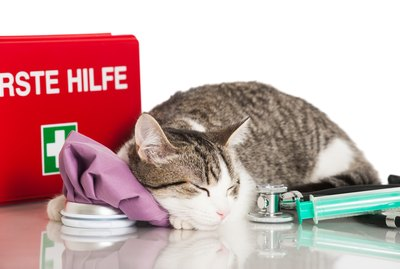 How to Make a First-Aid Kit for Your Cat