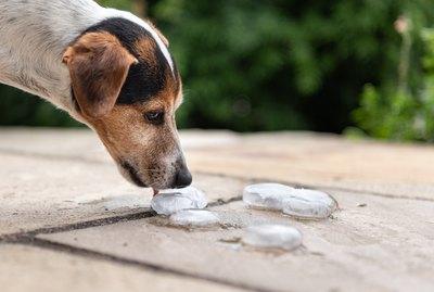 Easy Enrichment: Make a DIY Frozen Treasure Game For Your Dog