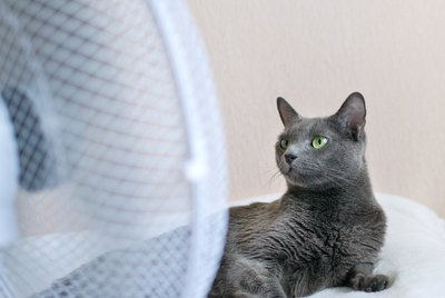 How to Keep Your Cat Cool in the Summer