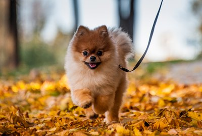 Small Dogs That Weigh Under 10 Pounds