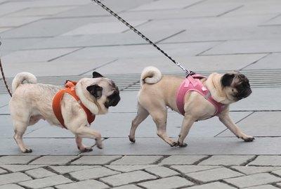 10 Best Dog Breeds for City Dwellers