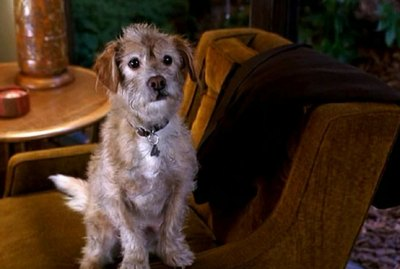 11 Reasons Why Baxter Is One Of Our Favorite Movie Dogs