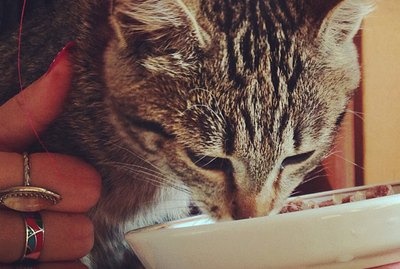 13 Healthy Cat Food Brands Your Kitty Will Purr Over