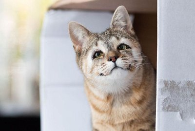 Here's How Cats Born Without Eyelids Get A 2nd Chance At Sight