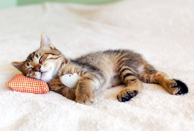 9 Money & Time-Saving Tips For Cat Owners