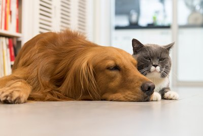 Can My Dog & Cat Live Together Peacefully?