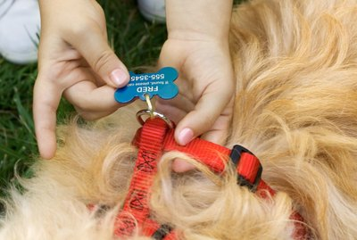 Changing an Adopted Dog's Name
