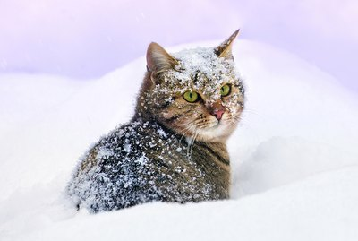 Do Cats Need More Food When It Gets Cold?