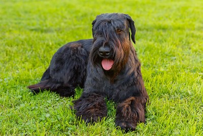 Dog Breeds Known For Territorial Behavior