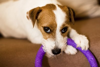 Dogs Notorious for Chewing