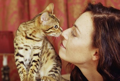 How Do Cats Show Their Love?