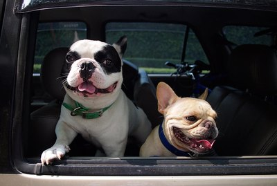 How Long Can A Dog Ride In a Car?