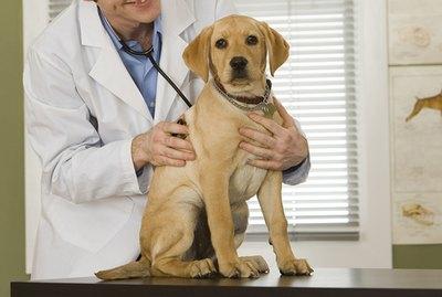How Often Should a Dog Visit the Vet?