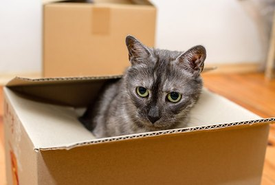 How to Move Houses With Pets