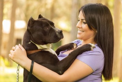 Protective Dogs That Are Affectionate