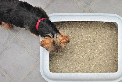 Tips For Litter Training A Dog