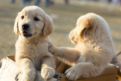 Top 20 Most Popular Dog Breeds in the US