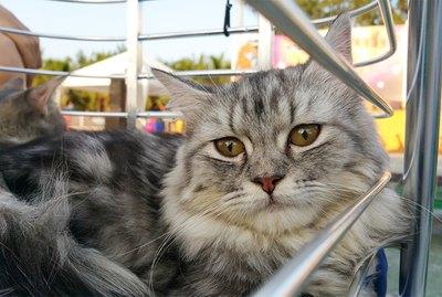 Unique Pet Adoption Event Ideas