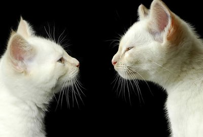 Why Do Cats Touch Noses?