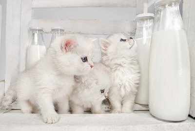 Can Cats Drink Cow's Milk?