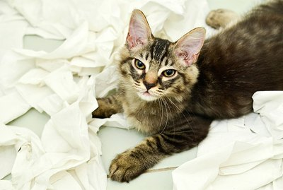 Do Cats Feel Guilty?
