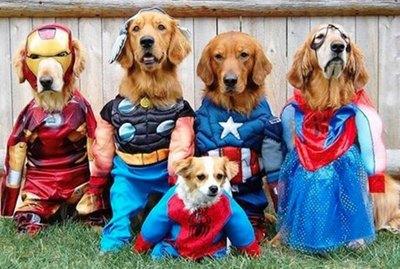 11 Superhero Costumes For Pets
