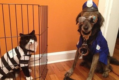 21 Awesome Duo Costumes For Two Pets