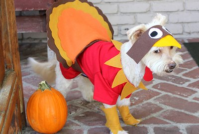 How To Make A Turkey Costume For A Dog
