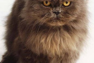 How to Get Rid of Static Cling on Cats