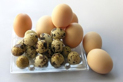 How to Microwave Crushed Egg Shells for Wild Birds