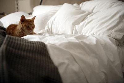 How to Stop an Inside Cat From Peeing on the Bed