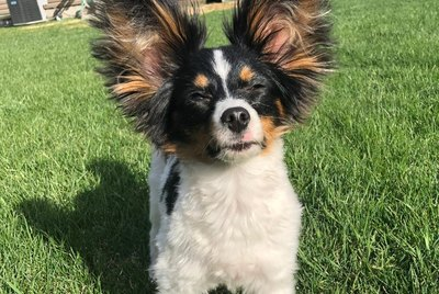The Very Best of The Big Ear Dog Challenge