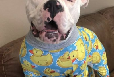 17 Dogs Who Are Ready for Bed