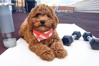 19 Dogs Absolutely Crushing Their Workouts