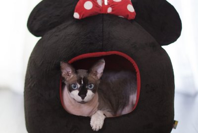 5 Super Cute 'Mickey Mouse & Friends' Dog & Cat Beds