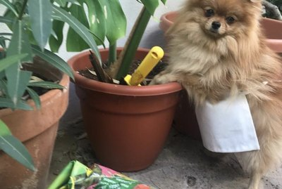 21 Dogs Who Are Better Gardeners Than You