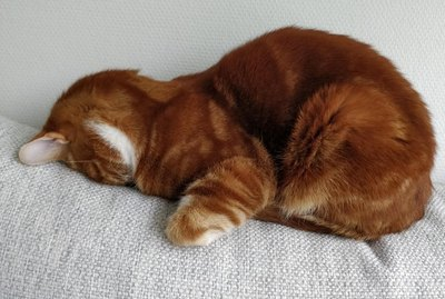 15 Pictures of Cats Faceplanting That Are All of Us