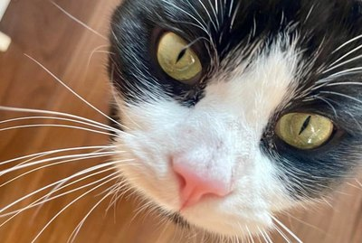 16 Kitties With Magnificent Whiskers