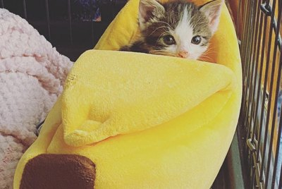 16 Cats (And 1 Dog) Sleeping in Banana Beds