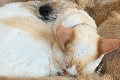 21 Pairs of Cats and Dogs Who Are Boldly Choosing Snuggles Over Struggles