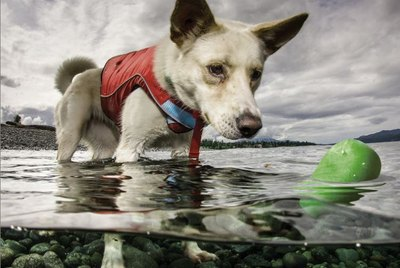 5 Unique Dog Toys That Float – Perfect for the Pool or Beach