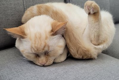 24 Photos That Prove Cats Are All-Star Sleepers