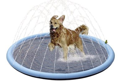 3 H2O-mazing Options for Dogs That Aren't Ready to Swim