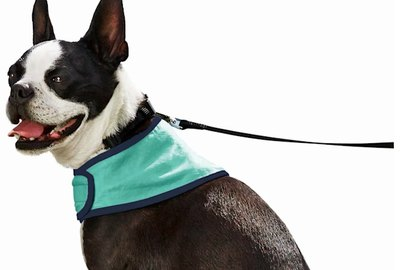 6 Cooling Products to Keep Your Dog Safe & Comfortable in the Heat
