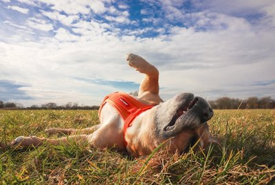 Urgent: These 17 Silly Dogs Are Here to Brighten Your Day