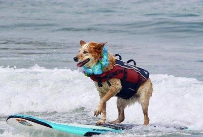 19 Dogs on Surf Adventures in The Ocean (& Kiddie Pools)