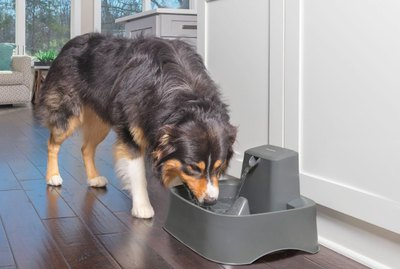 Pet Hydration Awareness Month: Huge July Sale on Chewy
