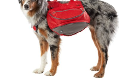 The Best Dog Backpacks & Gear for Day Outings