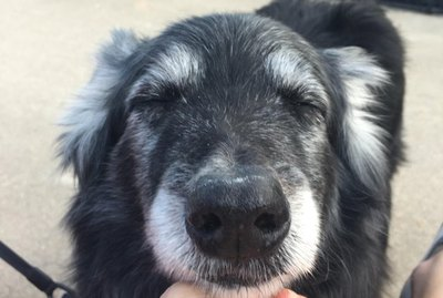 Enjoy These 18 Adorable Senior Dogs Living Their Best Lives