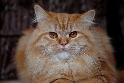 How do I Troubleshoot a Cat Genie?